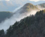 神山杉ホームページをオープンしました。
