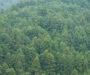 森林ビジョン策定について
